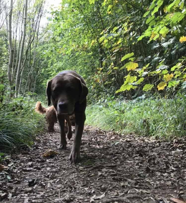 dog walker services brighton and hove
